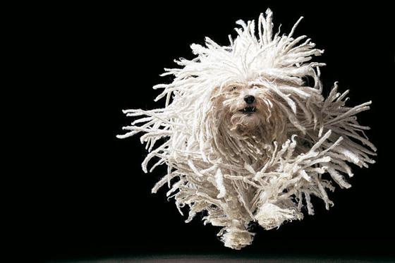 Tim Flach Hunde 1