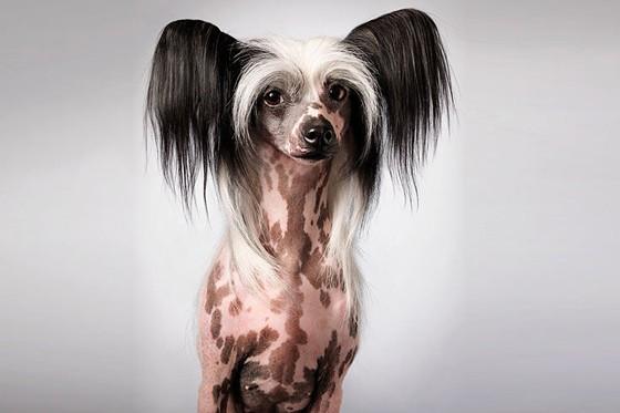 Tim Flach Hunde 2