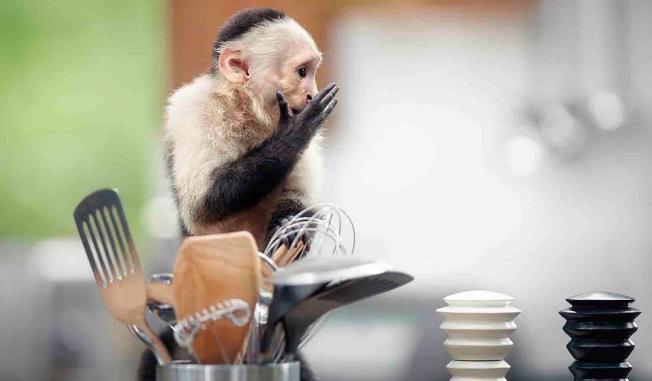 ikea monkeys hed 2015