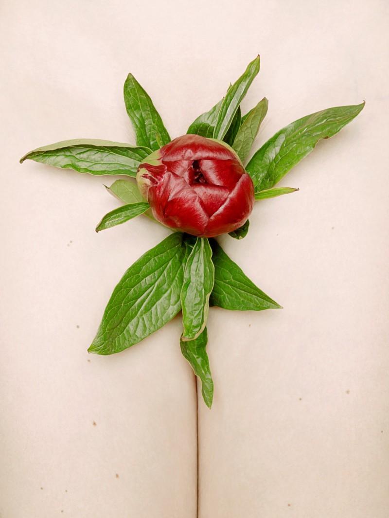 Hortus Florum #8, Paeonia Hybride von Thomas Rusch